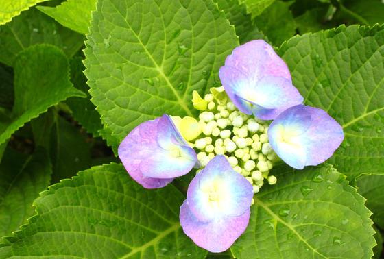 本当の花びらは中央のつぶつぶの部分なのです!!