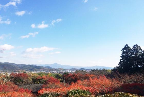 京都市内が一望できる!
