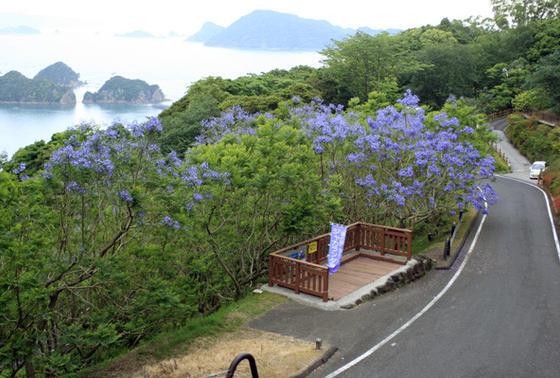 日本で唯一の群生林