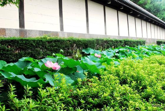 ビルの裏は東本願寺の濠