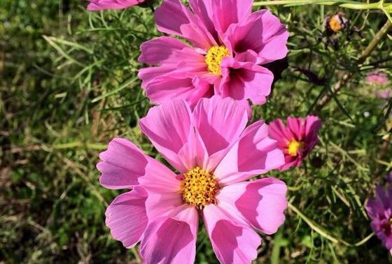 THE お花畑