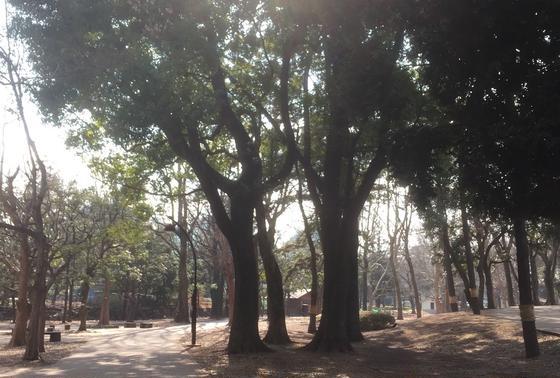 高い木が多い