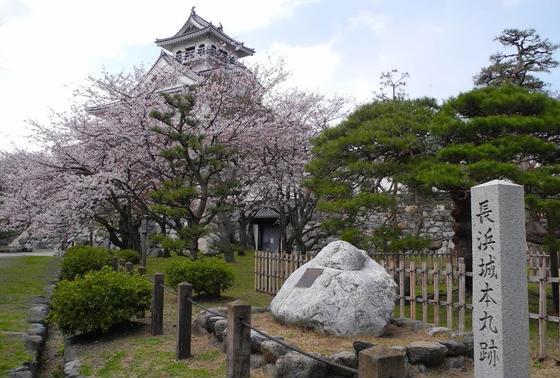 豊公園は桜の名所