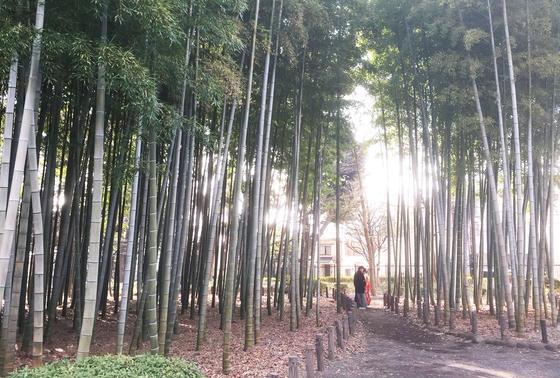 蘆花恒春園の竹林