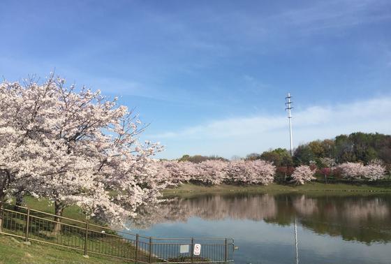 鶴見緑地の春 その1