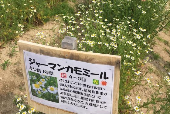 100円で花摘み出来ます。