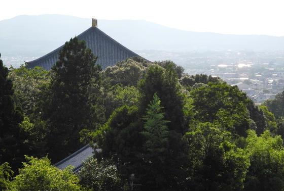 大仏殿の屋根が見えます
