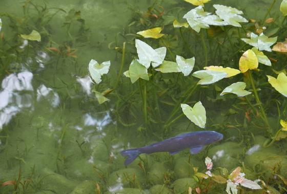 噂の「モネの池」がある