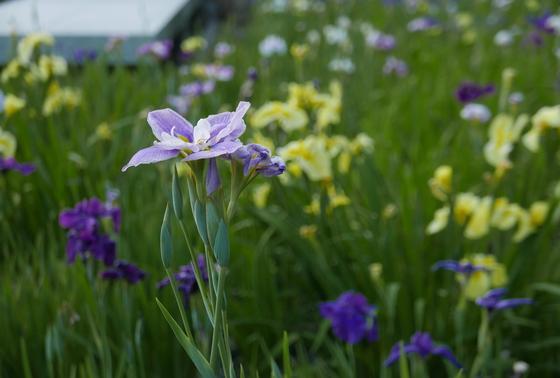 色とりどりの花が咲いてます