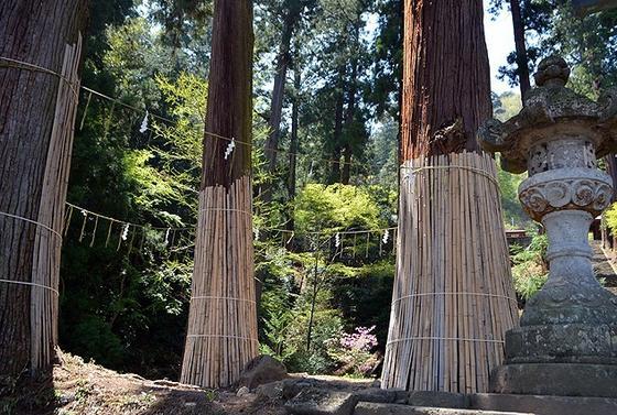 パワースポットの三本杉