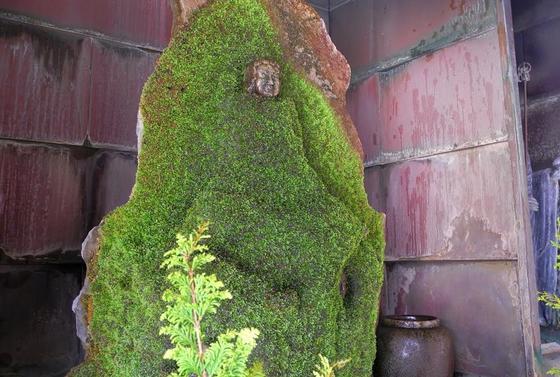 苔で覆われてます