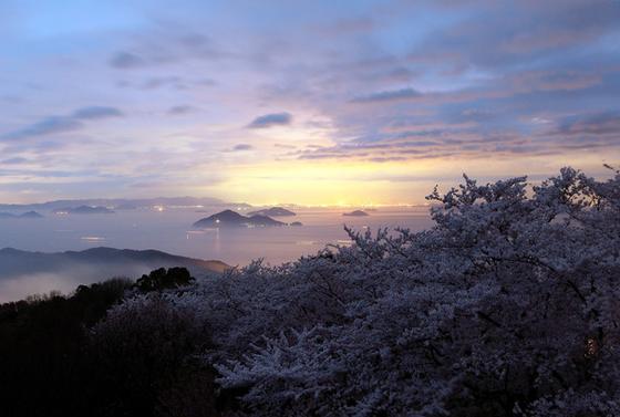 桜の季節の美しさは至高!