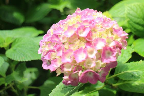 四季折々の花たち