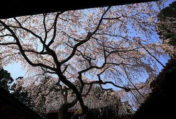 2014年「そうだ、京都、行こう」キャンペーンの舞台になったお寺です