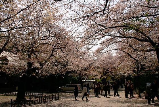 春は桜が満開に!!