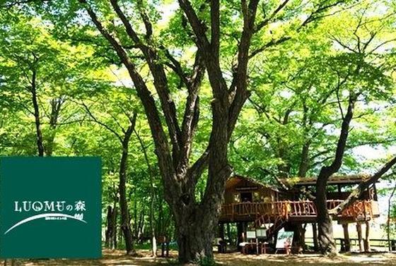 ルオムの森