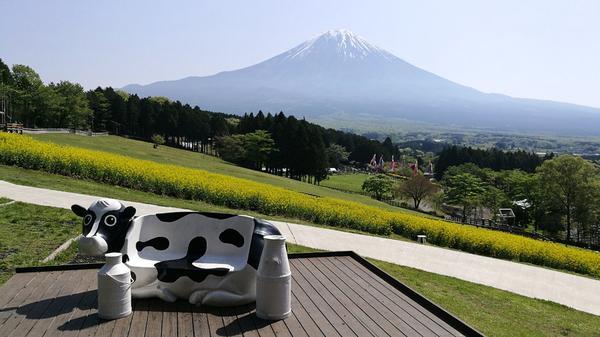 富士山テラスの牛さんチェアー