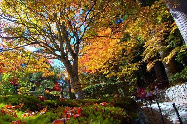 光前寺の光苔