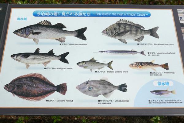 お堀で泳いでいる魚です