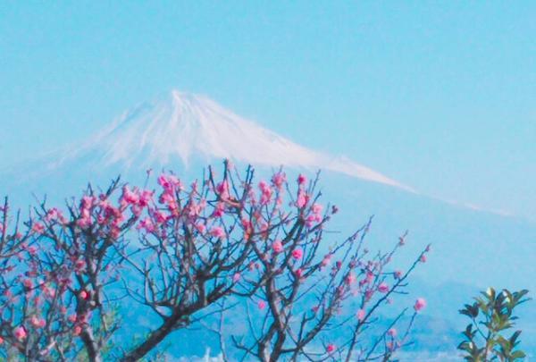 日本平ホテルの写真・動画_image_268777