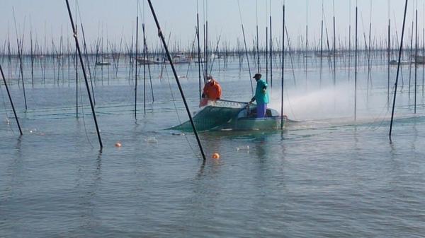 河内海岸の写真・動画_image_100721