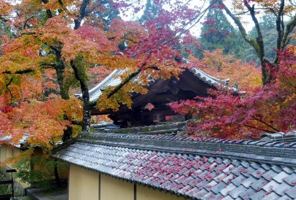 西明寺の写真・動画_image_102855