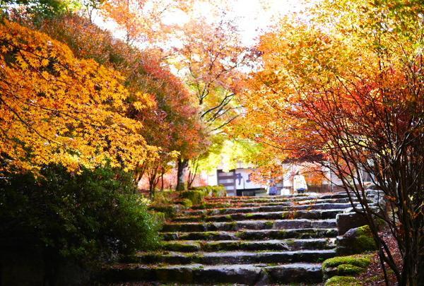高源寺の写真・動画_image_104509