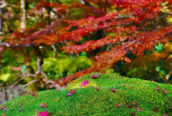 高源寺の写真・動画_image_104510