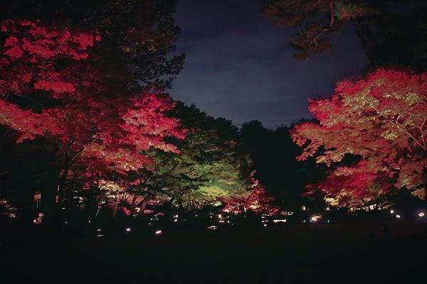 大田黒公園の写真・動画_image_104983