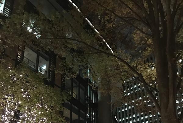 丸の内ブリックスクエア (Marunouchi BRICK SQUARE)の写真・動画_image_106093