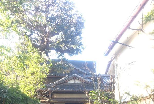 朝倉彫塑館の写真・動画_image_106147