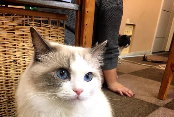 Cat Cafe ねころびの写真・動画_image_106594