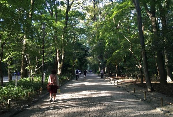 糺ノ森の写真・動画_image_126776