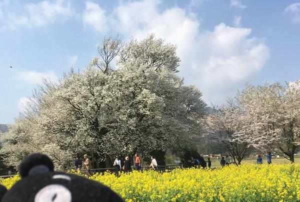 一心行の大桜の写真・動画_image_127340