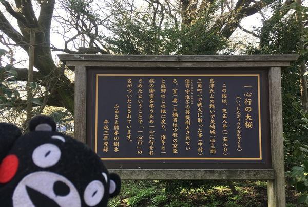 一心行の大桜の写真・動画_image_127344