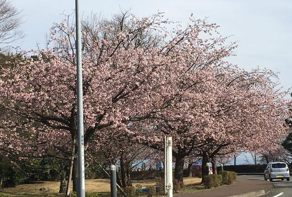 伊豆半島の写真・動画_image_127472