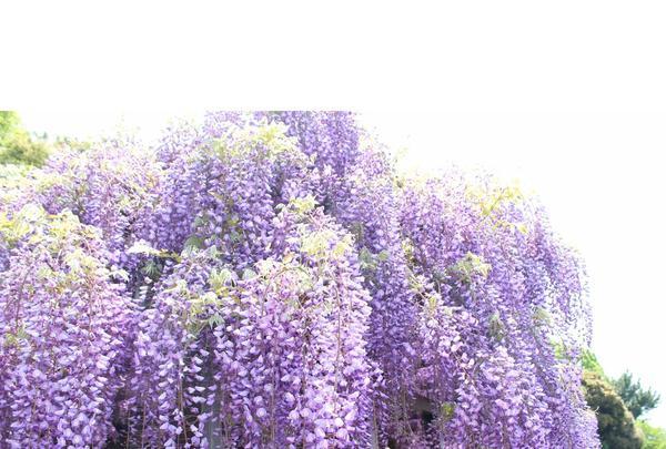 上下水道局 鳥羽水環境保全センターの写真・動画_image_132668