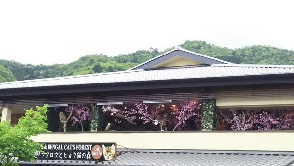 嵐山公園の写真・動画_image_134458