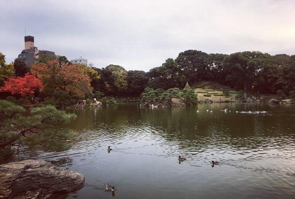 清澄庭園の写真・動画_image_144147