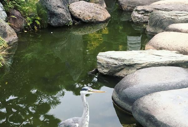 清澄庭園の写真・動画_image_144151
