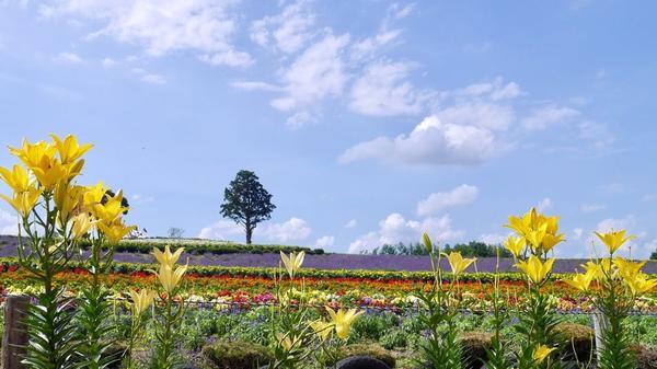 ぜるぶの丘の写真・動画_image_149937
