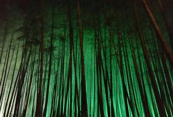 武雄神社(武雄五社大明神)の写真・動画_image_150644