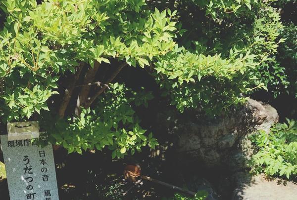 旧今井家住宅・美濃史料館の写真・動画_image_153809