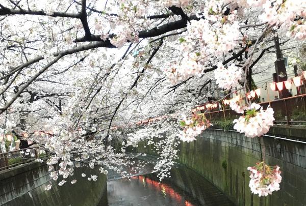 目黒天空庭園の写真・動画_image_163294