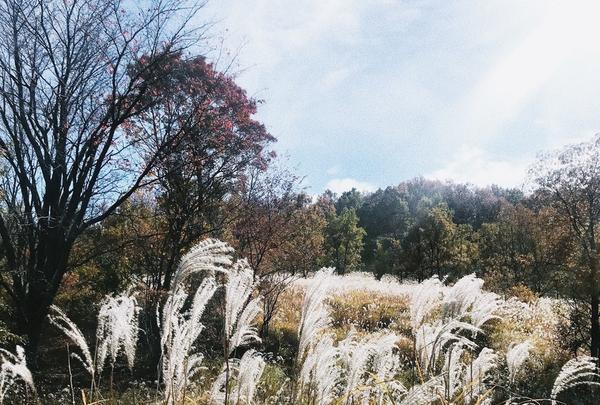 マゼノ渓谷の写真・動画_image_170036