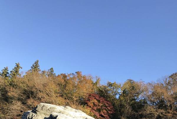長瀞ライン下りの写真・動画_image_178010