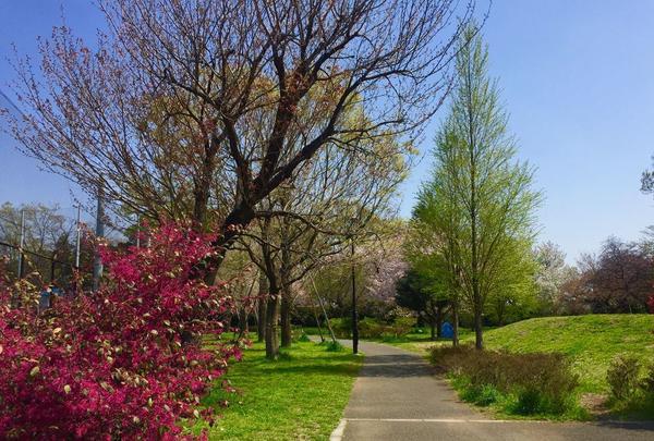石神井公園の写真・動画_image_187447