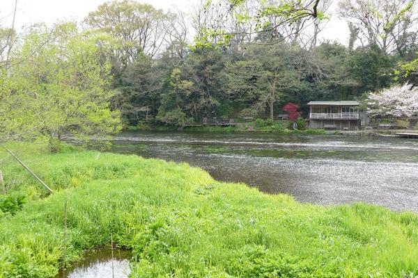 柿田川公園の写真・動画_image_187551