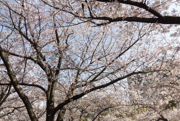 大阪城公園の写真・動画_image_187566