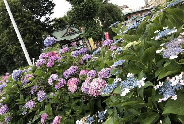 川越八幡宮の写真・動画_image_188341
